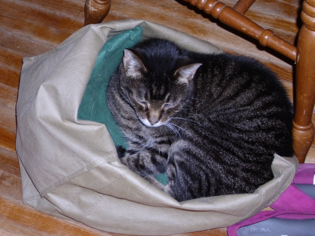 Tabby in the Shopping Bags