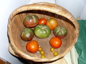 Black Sea Man tomatoes, Saucey tomatoes, yellow cherry tomatoes, heirloom tomatoes, garden, urban farming, harvest